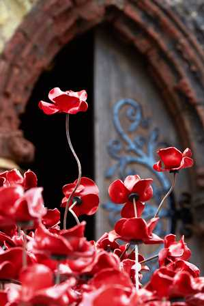Image of the ceramic poppies at the St Magnus Catherdral.